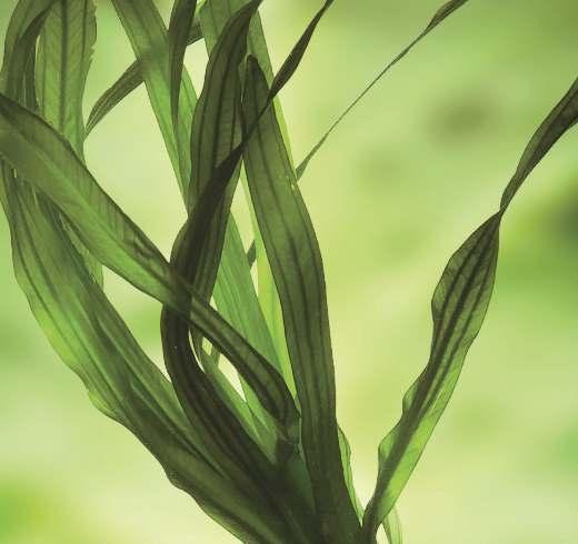 imeprial-strom-natural-materials-seaweeds